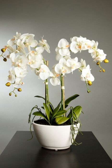 Orchidea-kisokos: így maradjon csodaszép az orchideád egész évben