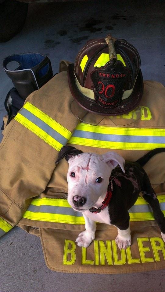 Tűzoltó lett a tűzből kimenekített kutyából - képek