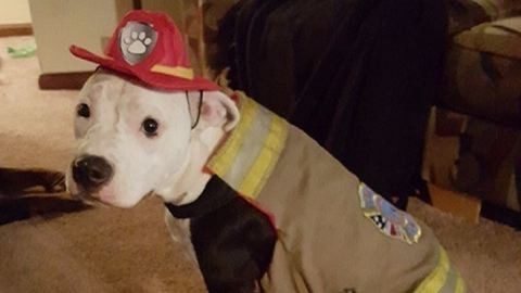 Tűzoltó lett a tűzből kimenekített kutyából – képek