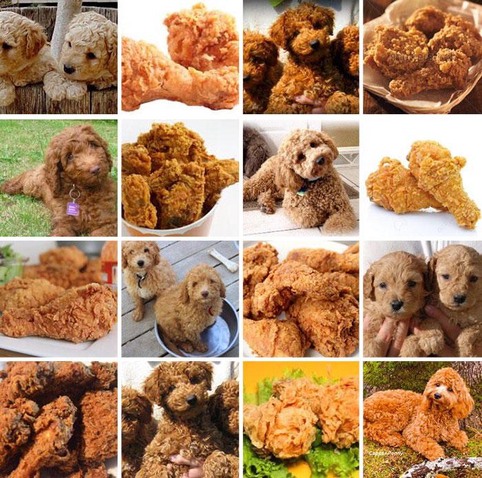 Kutya vagy kaja? 5+1 kép, ami elgondolkoztat mit látsz rajta