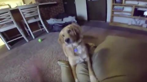 Nagyon örül új ágyának a kutya – cuki videó
