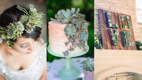 Sosem gondoltad volna, hogy ezek a növények esküvői dekorációként is megállják a helyüket – képek