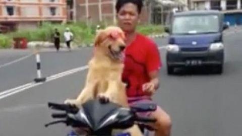 Ennél a napszemüvegben mopedező kutyánál ma már nem látsz menőbbet – videó