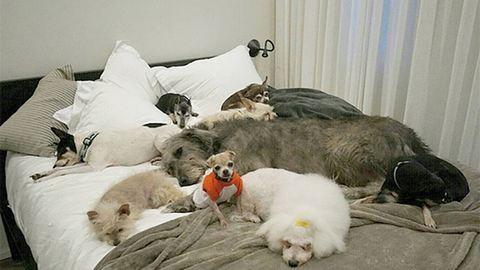 Kutyáknak csinált idősek itthonát a jószívű férfi