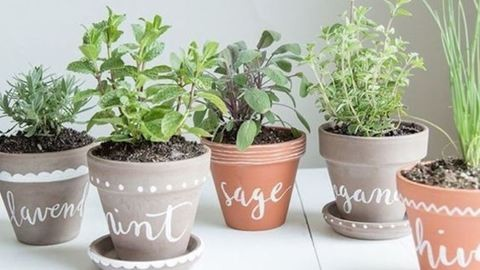 Fűszernövények otthon: 8 tipp a gyönyörű fűszerkerthez