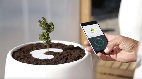 Növény nőhet szeretteid hamvaiból