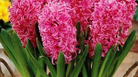 Így készíts tavaszi virágdekorációt orchideával – videó
