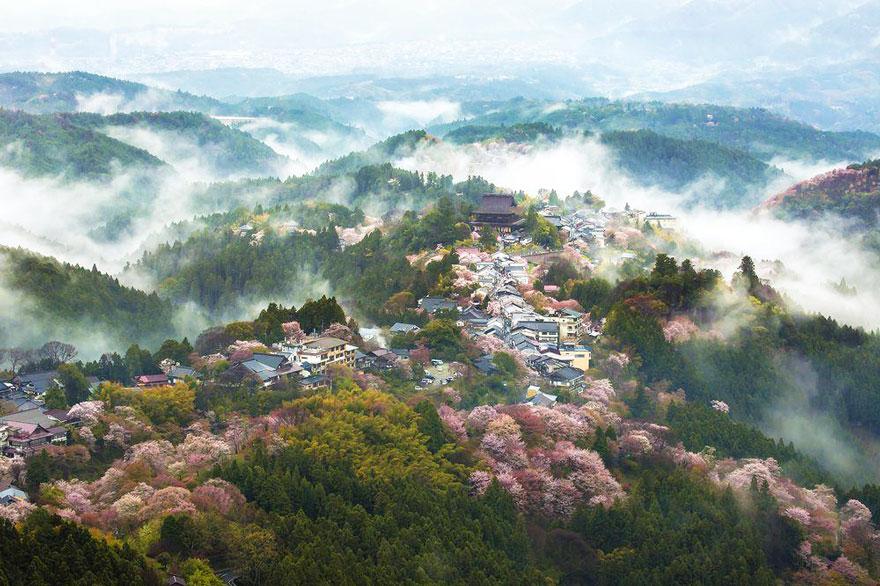 Csodálatos fotók a rózsaszínbe borult Japánról