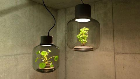 Így neveld a növényed, ha kevés a fény a lakásodban