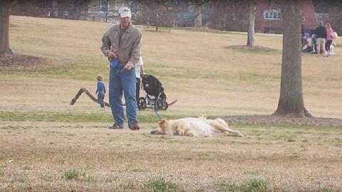 Halottnak tetteti magát a kutya, hogy tovább játszhasson a parkban – cuki videó