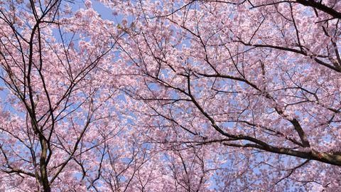 Csodaszép, meleg tavaszi napok jönnek