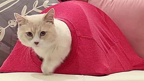 Készíts nagyszerű macskasátrat a kedvencednek 10 perc alatt