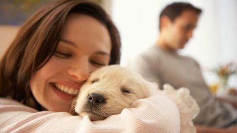Ilyen egészséges háziállatot tartani