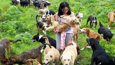 A kutyabarátok mennyországa ez a Costa Rica-i kutyasziget – fotók