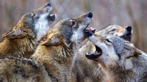 Lenyűgöző: így dolgoznak a vadállatokkal a világhírű természetfilmesek