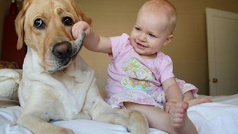 11 kutya, akinél még láttunk türelmesebbet