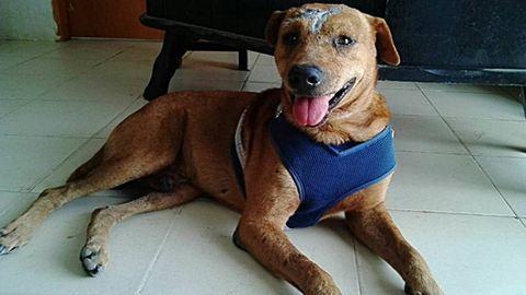 Családba került és már jól van a brutálisan megkínzott kutya