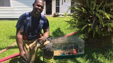 Égő házból mentették ki a tengerimalacot a tűzoltók
