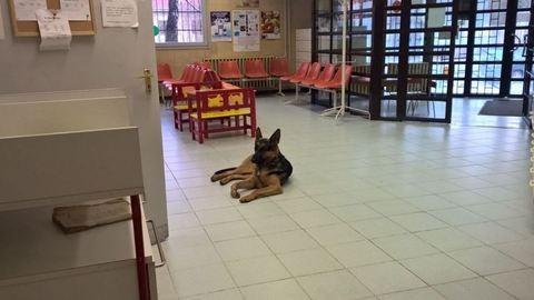 Rex, az ország legszőrösebb asszisztense: könyv készül az óbudai rendelő kutyájáról
