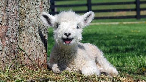 Dobd fel a pénteked cuki mosolygós állatokkal! – fotók