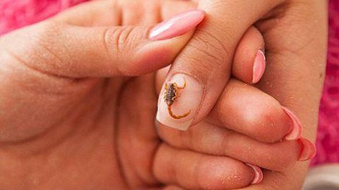 Életveszélyes divat: a skorpiós manikűr – videó
