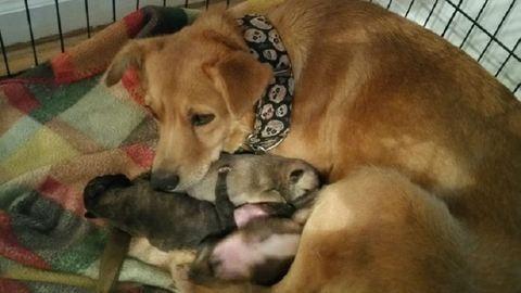 9 éves kisfiú mentette meg az újszülött kutyák életét – videó