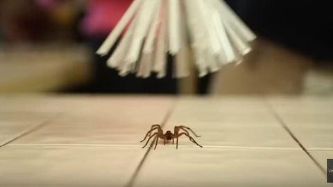 Íme a zseniális apuka találmánya a pókok befogására – videó