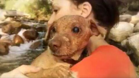 Jóra fordult a borzasztó körülmények között tartott vak és rákos kutya sorsa – fotók