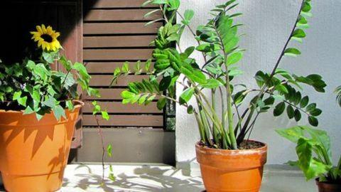 Ekkor tedd ki a szobanövényeidet a szabadba!