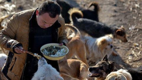 Minden vagyonát halálra ítélt állatokra költötte