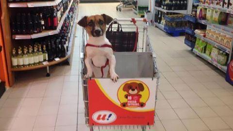 Kutyabarát bevásárlókocsikkal szerelték fel a szupermarketet – képek