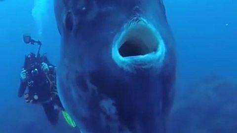 Brutálisan nagy halat találtak a búvárok, nem fogsz hinni a szemednek