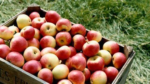 Nagy a zűr a magyar alma körül