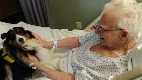 Megható módszerrel segíti a betegek gyógyulását ez a kórház – fotók