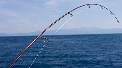 Irdatlan nagy halakat fogtak a Desedán