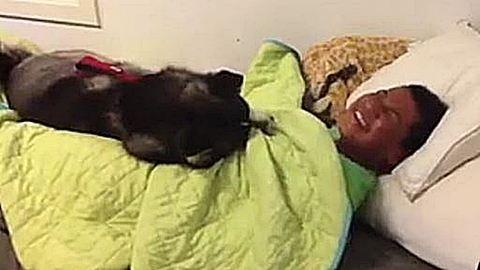 Amikor nem hagyja a kutyád, hogy felkelj az ágyból – nagyon vicces videó