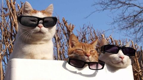 Helló, napszemüvegszezon!