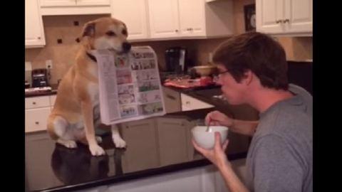 Ilyen segítőkész kutyával még tuti nem találkoztál – videó