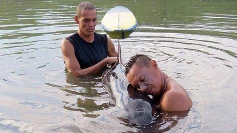 Szörfösök segítettek a bálnabébin – képek