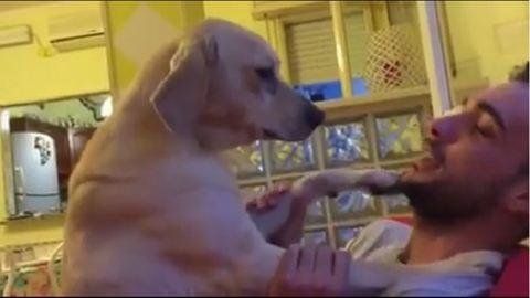 Ennek a bocsánatért esedező kutyának nem lehet ellenállni – cuki videó