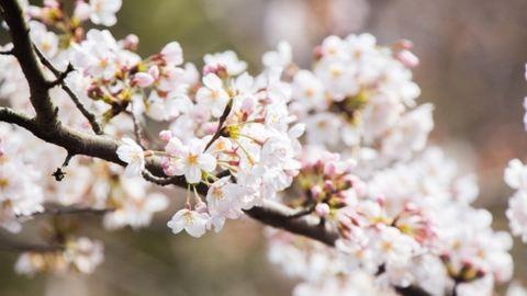 Betett a fagy – oda az idei cseresznye-, eper- és almatermés