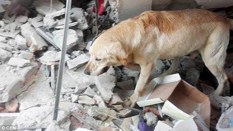 Kimerültségben halt meg az ecuadori földrengés túlélőit kereső mentőkutya