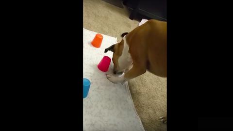 Ez a kutya istentelenül rossz itt a piros, hol a pirosban – vicces videó