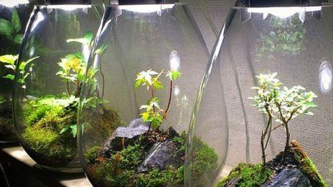 Így készíts egyszerűen minikertet