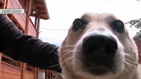 Magyar kutya lehet a legidősebb – videó
