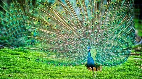 Kvíz: A stílusod alapján milyen madár vagy?