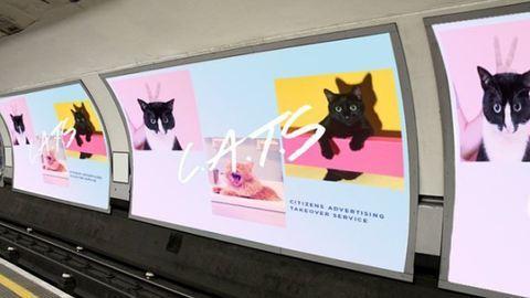 Macskás képekre cserélnék a reklámokat a metróban