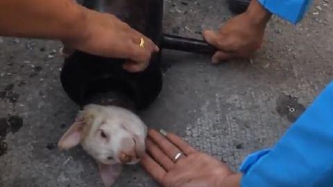 Így mentették ki a csőbe szorult kutyát – videó