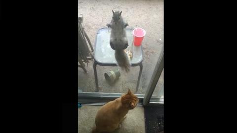 Üvegre tapadt mókus riogatja a macskát – videó