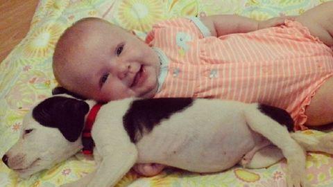 Ennél a kisbabánál és a kölyök pitbullnál ma már nem lesz cukibb – videó